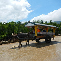 Pinaisara Waterfall Basin & Yubu Island Waterbuffalo Ride set Tour